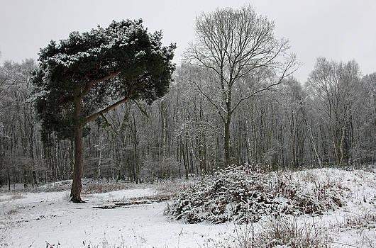 Cheshire Woodland by Derek Sherwin