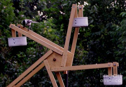 Gail Matthews - Chickadee riding the Ferris Wheel
