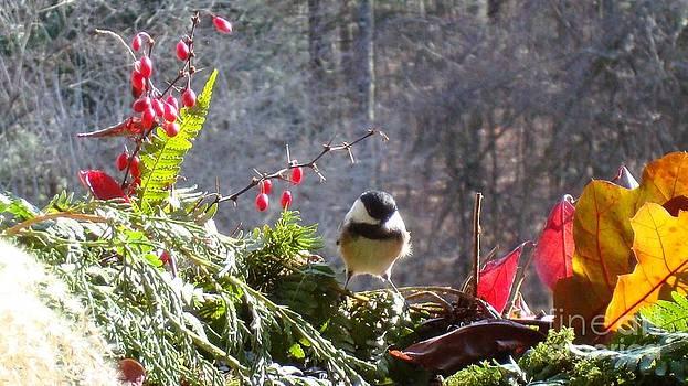 Chickadee three by Virginia Pakkala