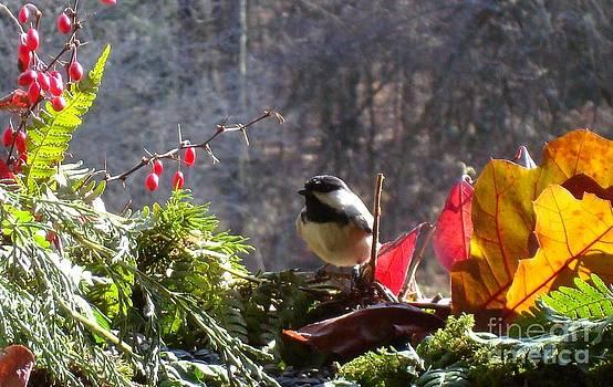 Chickadee two by Virginia Pakkala