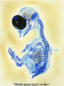 Chicken Embryo by Taryn  Libby
