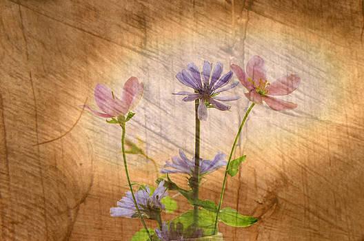 Randall Branham - Chicory blue and pink