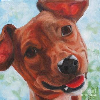 Chihuahua Closeup by Pet Whimsy  Portraits