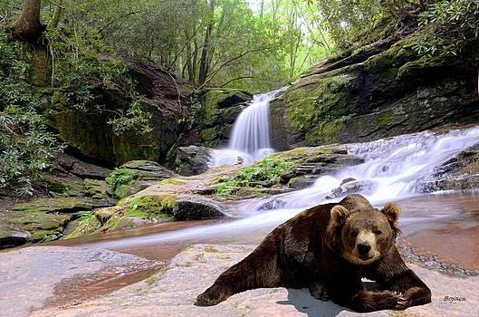 Chillin Bear by Bob Jackson