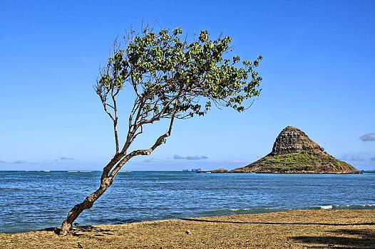 Chinamans Hat Oahu by DJ Florek
