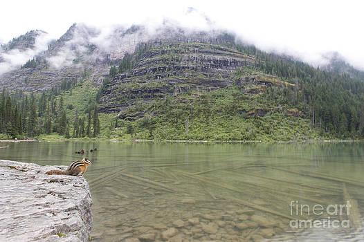Jonathan Welch - Chipmunk at Glacier National Park