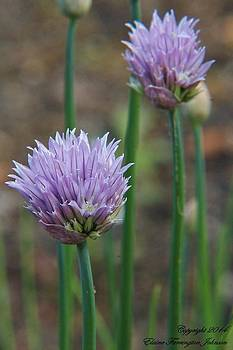 Chives by Elaine Farrington Johnson