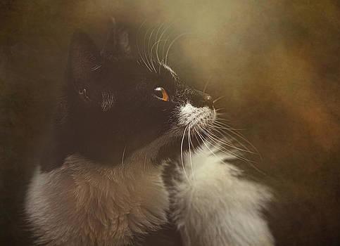 Chloe by Pat Abbott