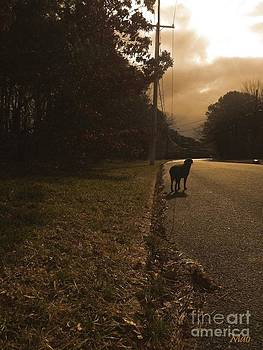 Chocolate Lab and the Unknown World by Maideline  Sanchez