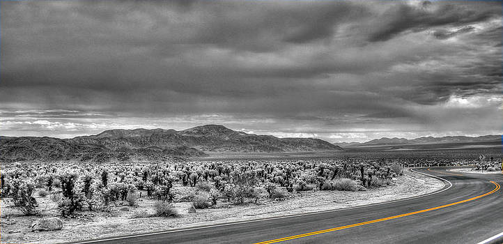 Cholla Road by Eric John Galleries