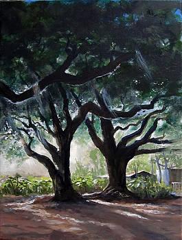 Chris's Oaks by Carol Hart