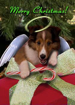 Jeanette K - Christmas Angel Sheltie