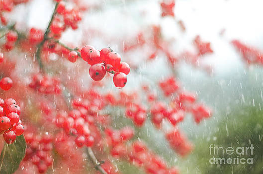 Christmas Berries by Tiffany Rantanen