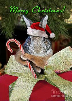 Jeanette K - Christmas Bunny Rabbit