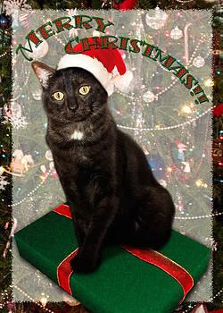 Adam Romanowicz - Christmas Cat