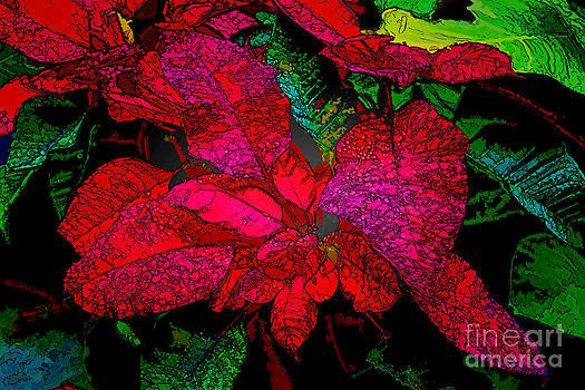 Jon Burch Photography - Christmas Flower
