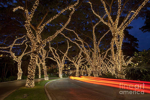 Christmas In Wailea by David Olsen