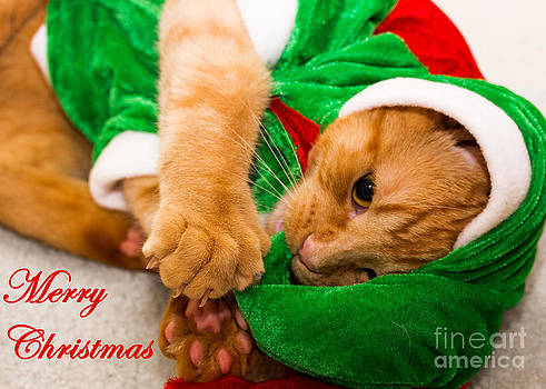 Christmas Kitten Greeting Card by Deanna Wright