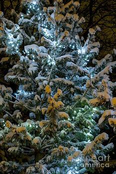 Steven Ralser - Christmas lights
