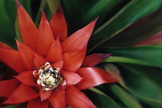 Harold E McCray - Christmas plant