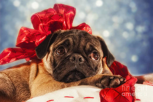 Christmas puppy by Van K Bazaldua