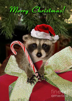 Jeanette K - Christmas Raccoon