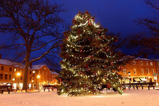 Christmas Tree in Market Square by Suzanne DeGeorge