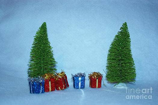 Christmas Trees with red and blue presents by Robert D  Brozek