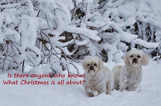 Christmas With Maltipoos by Lisa  DiFruscio
