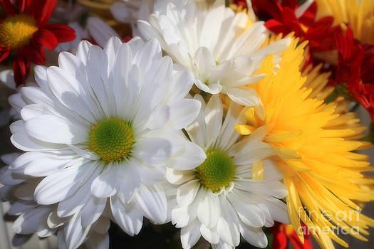 Cathy  Beharriell - Chrysanthemum Punch