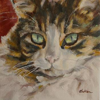 Chubby Tabby by Veronica Coulston