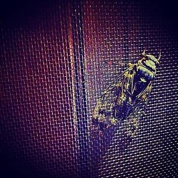#cicada #bug #windowscreen #screen by Shawn Who