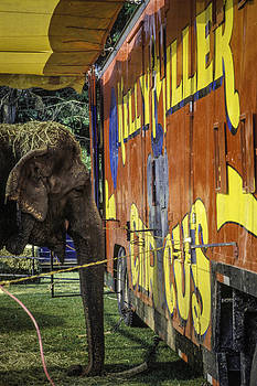 Circus elephant. by Brian R Tolbert