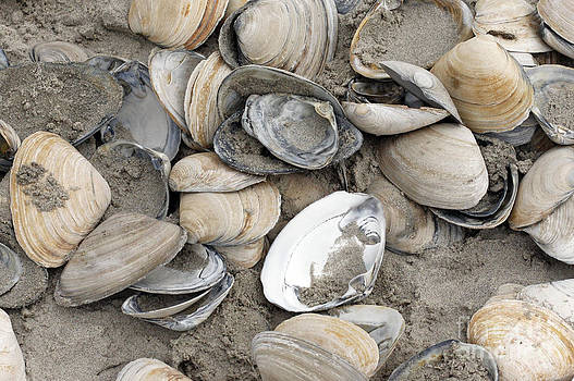 Clam Shell Beach  by Denise Pohl