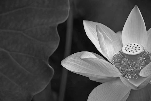 Clarity of heart by Jason KS Leung
