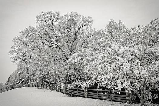 Classic Snow by Carol Whaley Addassi