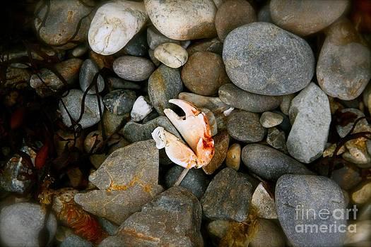 Claw by Belinda Dodd