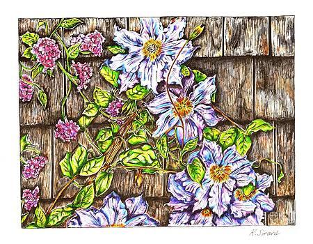 Clematis Flowers by Karen Sirard