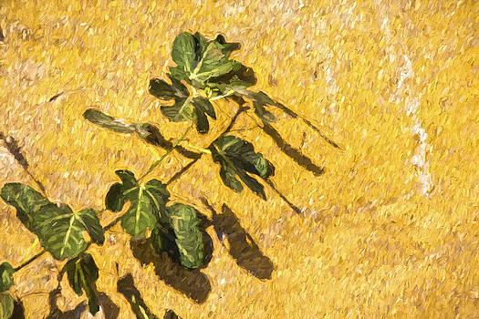 David Letts - Climbing Green Vine