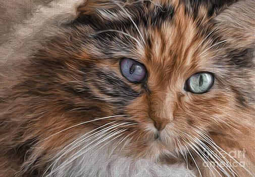 Deborah Benoit - Cloe Kitty