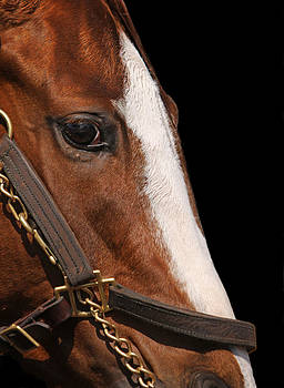 Close Up Detail of Face of Racehorse by Cheryl Ann Quigley