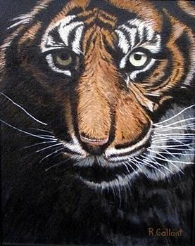 Close-up of a Tiger by Rick Gallant