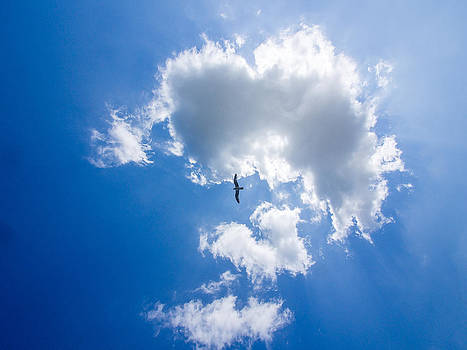 Cloud and seagull by Martin Liebermann