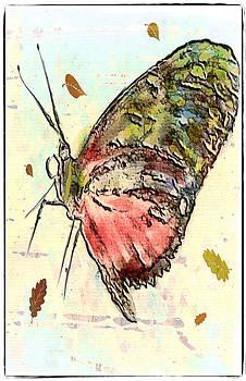 Cloud Butterfly by Jill Balsam