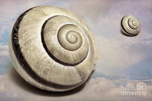 Cloud Shells by Lisa Cockrell