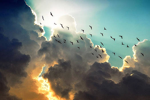 Clouds And Birds by Dorothy Walker