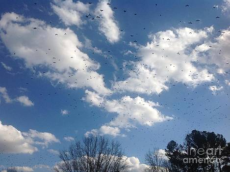 Clouds and Feathered Friends by Amanda Collins