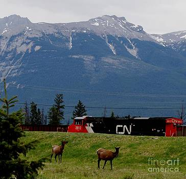Gail Matthews - CN Train and Mountains and Elk