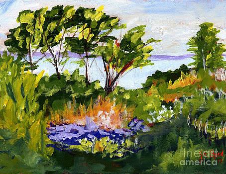Coastal Backyard by Joe Byrd