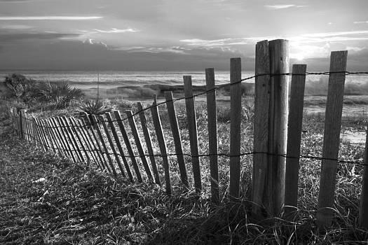 Debra and Dave Vanderlaan - Coastal Dunes in Black and White